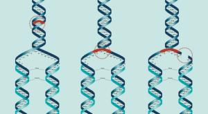 epigenética - Durviz