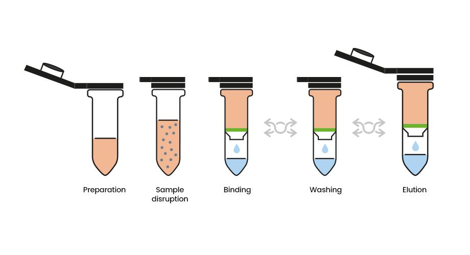 Kit Real Microbiome Fecal