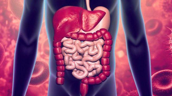 Kit Real de microbioma fecal