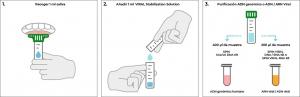 Recolección estabilización y transporte de muestras de saliva de 1 ml
